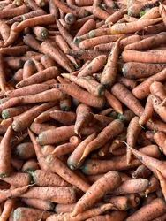 Healthy Red Carrot, Packaging Type: Plastic Bag, Packaging Size: 25 kg