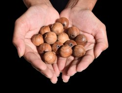 Sandalwood Loose Beads