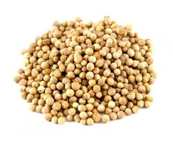 Green Natural Whole Coriander Seeds - Dhaniya