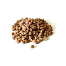 Feronia Limonea Seed