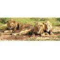 Sasan Gir Wildlife Sanctuary Holiday Package