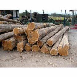Nigeria Teak Round Logs