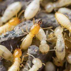 White Ant Control Service