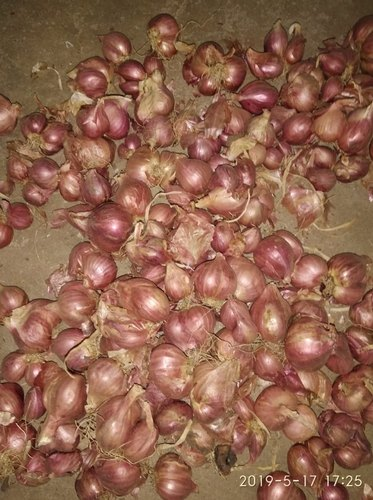 Fresh Drumstick-Vegetable - Sambar Onion Exporter from Coimbatore