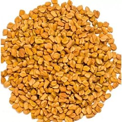 6 Month Organic Fenugreek Seeds, Packaging Size: 50kg