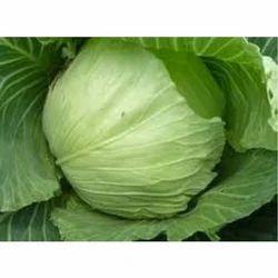 Fresh Cabbage, High In Protein