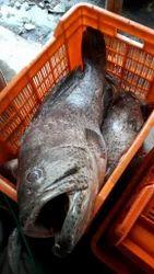 Aquarium Fish in Bhubaneswar - Latest Price & Mandi Rates