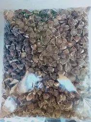 Moringa Seeds, Packaging Size: 1- 10 Kg