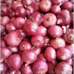 Onion in Delhi, प्याज, दिल्ली - Latest Price