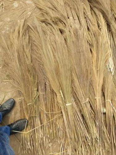 Broom Raw Material and Organic Ginger Wholesaler | Omnific Services