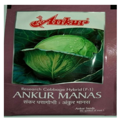 F-1 Manas Cabbage Seeds, Pack Size: 10 Gm Pkt