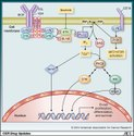 Ibritinib Lymphocytic Leukemia Ib Tib 140mg Cap, Anti-Cancer, Cadila Pharma