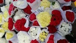 Carnations, Packaging Size: 20 Sticks