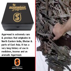 Agarwood Apari.SP-038