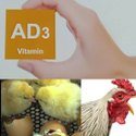 Vitamin AD3 Premix