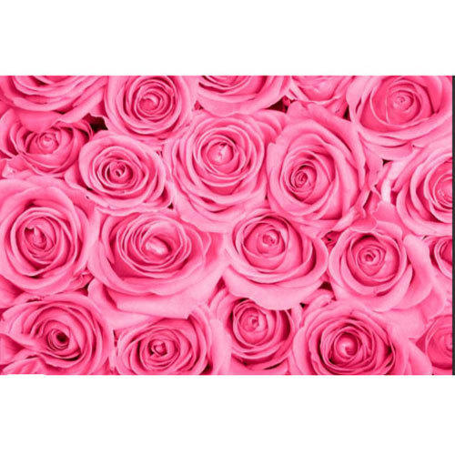 PVC Horizontal Pink Rose Flower Wallpaper Size 5 Square Meter