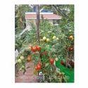 Tomato Grow Bags