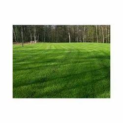 Pure Green Natural Lawn Grass
