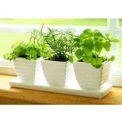 Medicinal Plants, Packaging Type: Box