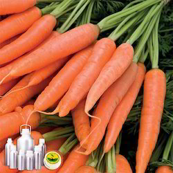 Carrot Tissue Oil