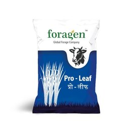 Foragen Hybrid Grazing Grass Seeds, Packaging Size: 1 Kg