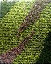 Wonder Bio-Green Wall