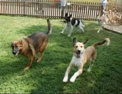 Dog Creche And Dogs Grooming
