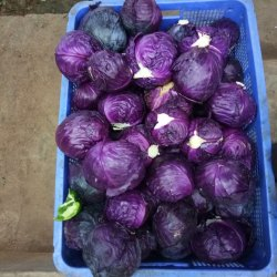 A Grade Fresh Red Cabbage, Packaging Type: Plastic Bag, Packaging Size: 5 Kg