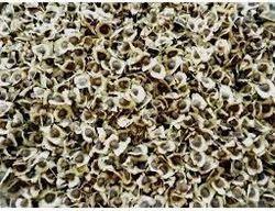 ODC Moringa Seed