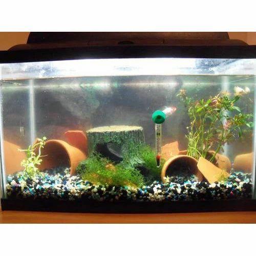 Home Decor Fish Aquarium फ श एक व र यम Rea Fish Aquarium Lucknow Id 15504748497