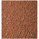 Brown Mustard Seed For Cold Storage Rental Services