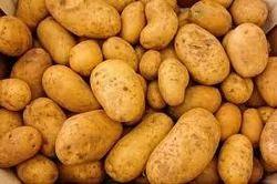 Fresh Potato, Packaging Type: Carton