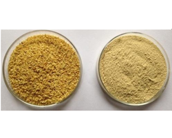 Cassia Tora Seeds Extract Powder