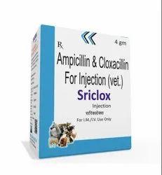 4 gm Ampicillin And Cloxacillin For Injection (Vet)