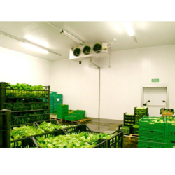 Vegetable Cold Storage Room