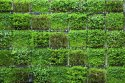 Vertical Gardens
