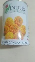 Indus seeds Unit Ashtagandha plus, For Agriculture, Pack Size: 10000