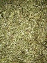 Keevanelli Powder(Phyllanthus Amarus)