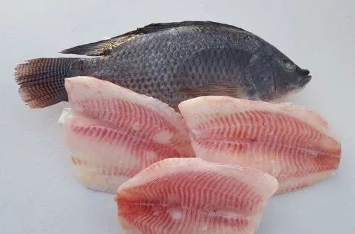 Cambay Tiger Tilapia Fish Fillet For Restaurant Rs 500 Kg Id 20837800997