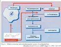 Acebrophylline Tablet