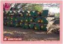 Brown & Golden Rangoon Teak Wood