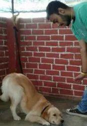 Dog Training And Behavior Service
