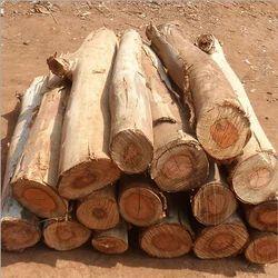 MP Wood Log