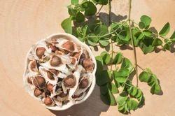 Cleaned Genuine Moringa Oil Seeds