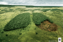 Environmental Impact Assessment Studies Service