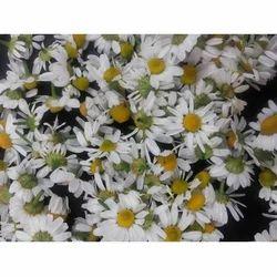 Organic Chamomile Flower