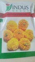 Indus Seeds Marigold Seeds Ashtagandha plus, Pack Size: 1000