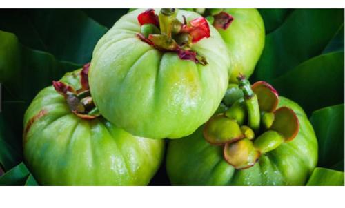 Dragon fruit diet pills image 3