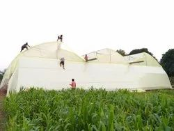 10 Male Agro Shed Labour Contractor Service