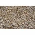Wheat Grain, Packaging Type: Gunny Bag, Packaging Size: 50 Kg